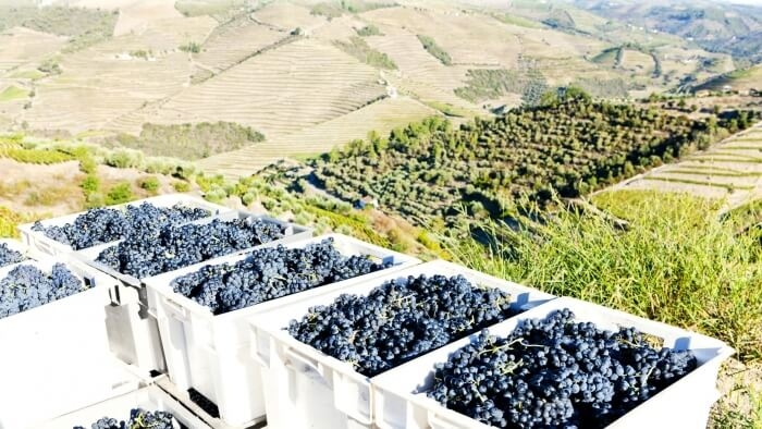 "Wine Tour ""Douro Valley"""